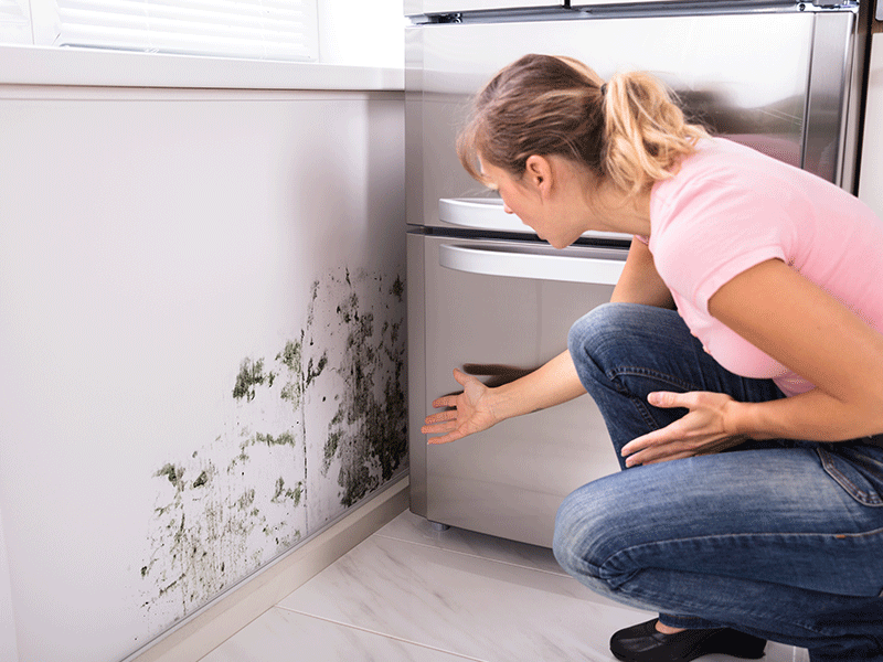 While many homeowners policies include some form of mold coverage, it can be difficult to determine what types of damage fall under your insurance plan.