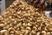 Photo of Unlocking Opportunities in Cashew Production
