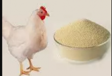 Photo of Make Your Own Quality Poultry Feeds To Save Cost And Make More Profits