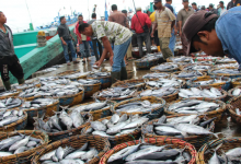Photo of How To Generate Millions Of Naira From Fish Farming For Just One Month