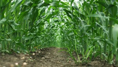 Photo of Productive Agricultural Businesses in Nigeria