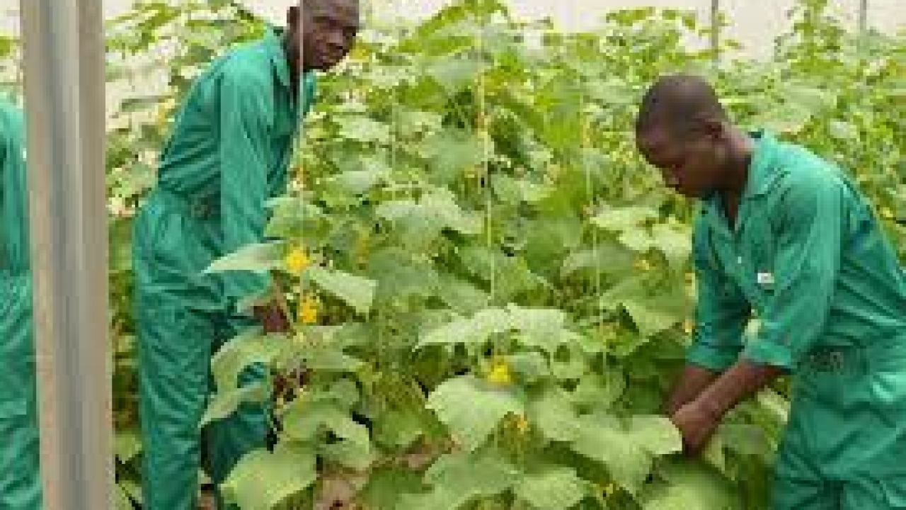 Job Vacancy Rayuwa Farms Limited,.  Rayuwa Farms Limited was incorporated on the 2nd of October, 2012. Prior to the incorporation