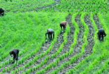 Agriculture Investing The Ways To Find Returns In Farming
